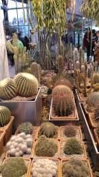kaktusy-1