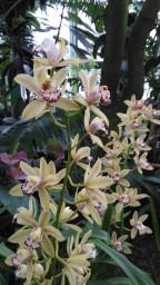 orhideja-3