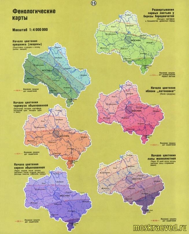 fenolog-karty